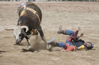 Rodeo rider being thrown from a bull